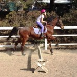 Dressage Jumping Two Points position