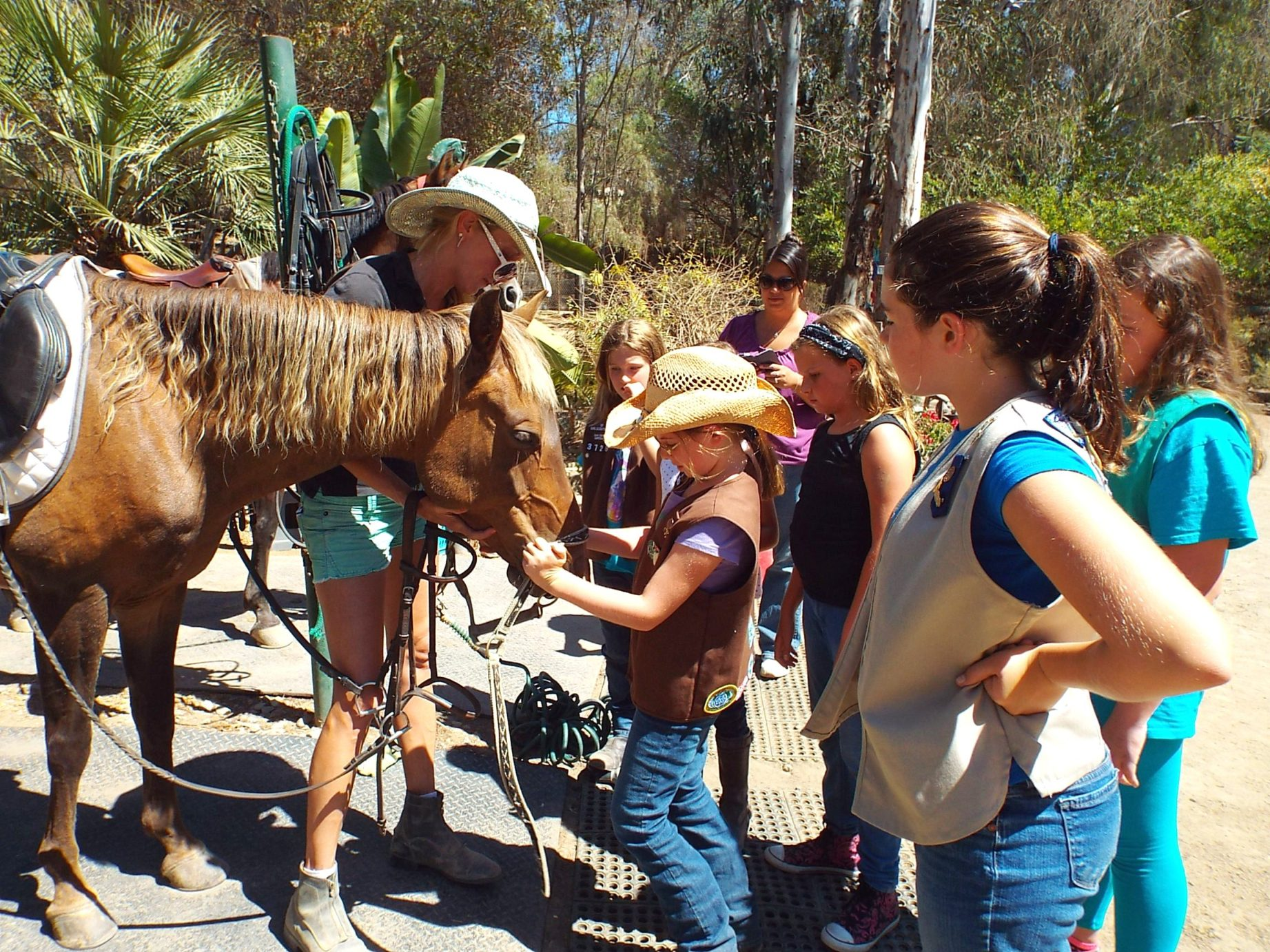 san diego girl scouts activities mega arte riding
